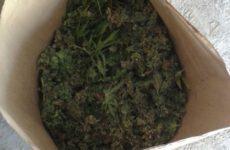 Więcej o: Czterech mężczyzn podejrzanych o uprawę marihuany