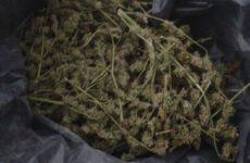 Więcej o: Zatrzymanie i środki zapobiegawcze wobec posiadacza znacznej ilości narkotyków